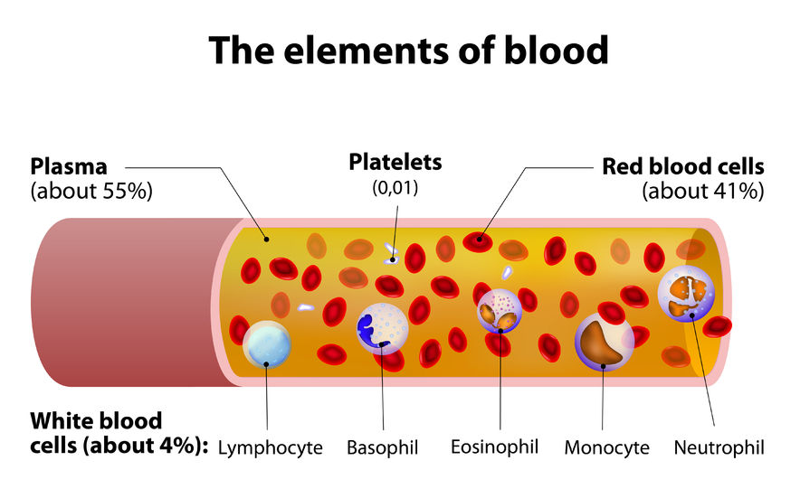 the elements of blood.